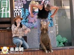 清境農場綿羊脫衣秀(約翰跑路提供)
